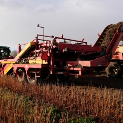 Wet conditions harvest crop